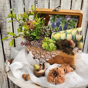 原種チューリップの木箱寄せ